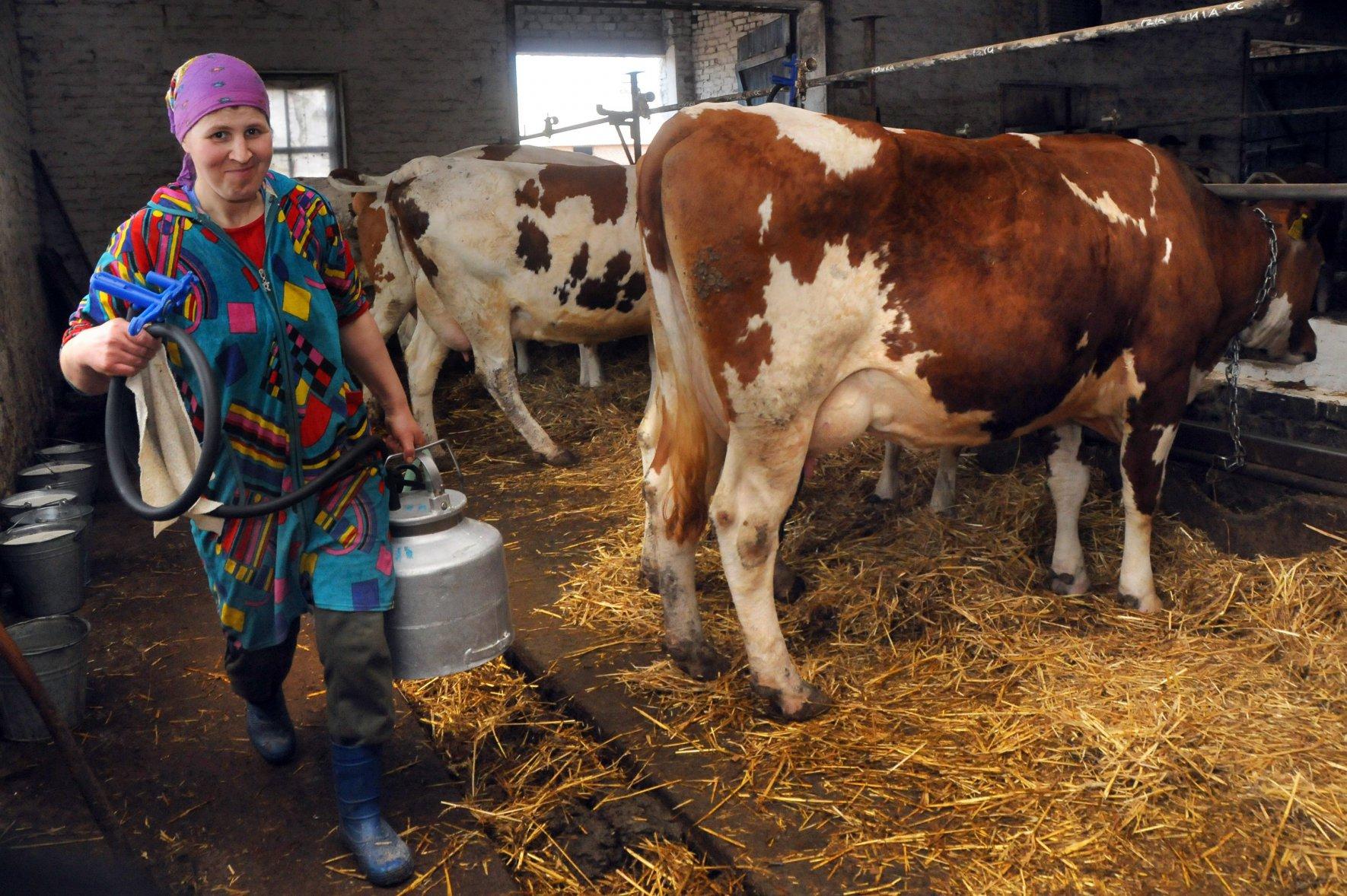 Про важливість молочної кооперації на селі