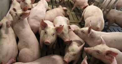 УВАГА! Часткове відшкодування вартості тварин!