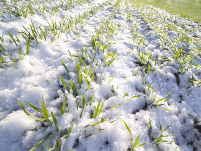 Стан справ у галузі рослинництва в донецькій області (на 27.11.2017)